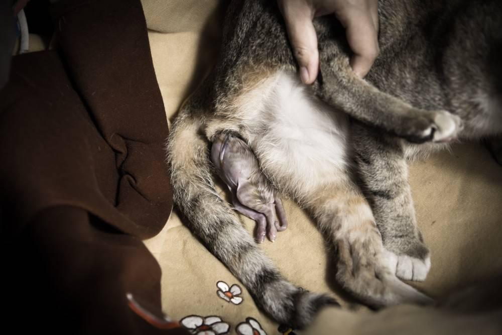 Основные особенности спаривания кошек и котов