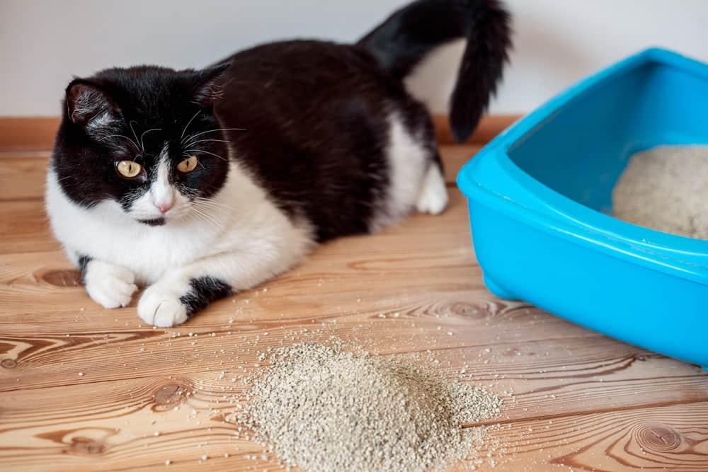 Кот гадит рядом с лотком: что делать с проблемой, причина