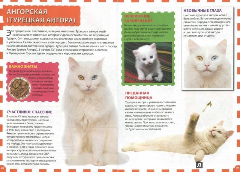 Турецкая ангора - описание породы и характер кошки