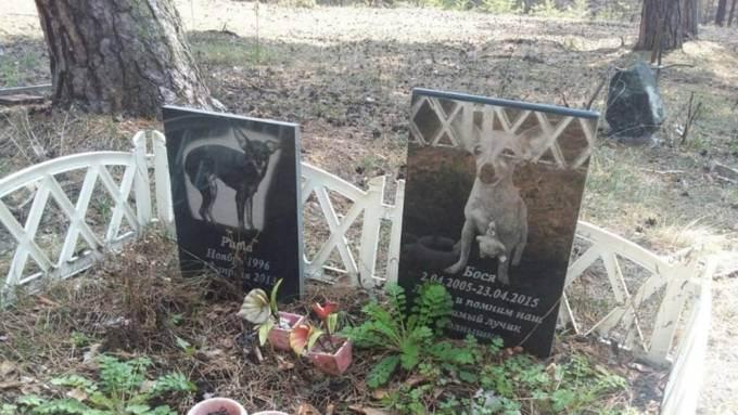 Лечение животных в москве