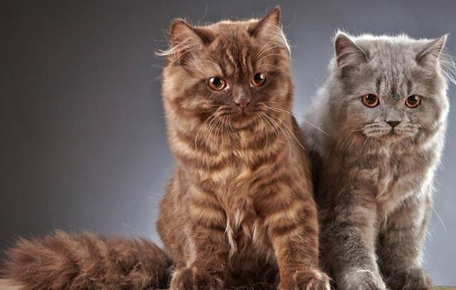 К чему снится кошки. видеть во сне кошки - сонник дома солнца