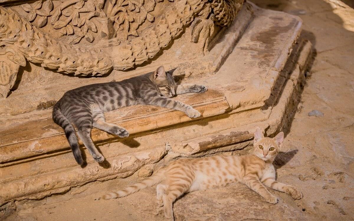 Как подружить двух котов в одном доме – основные правила сближения питомцев