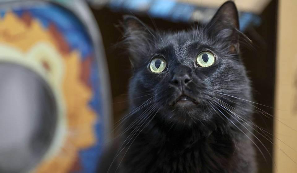 Сонник много котов и кошек. к чему снится много котов и кошек видеть во сне - сонник дома солнца