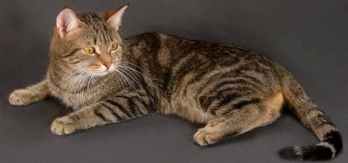 Имена и клички для полосатого котенка мальчика имена и клички для полосатого котенка мальчика