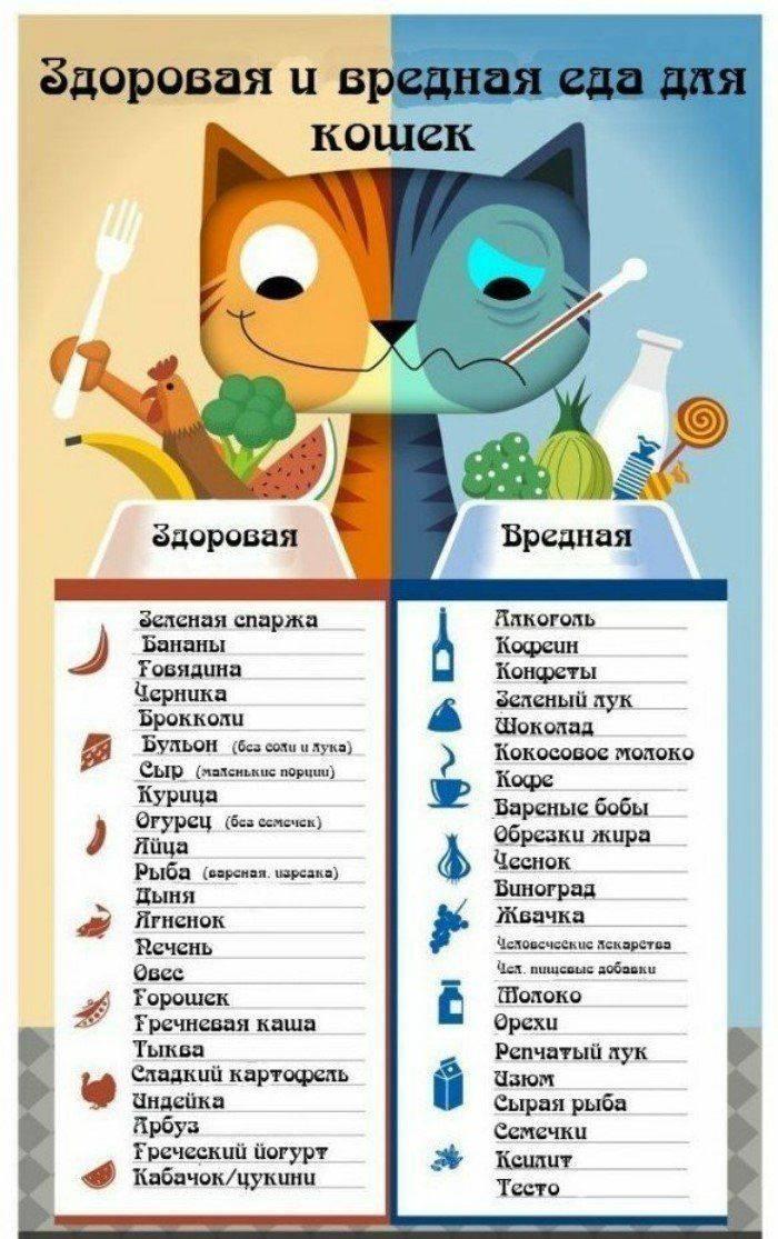Какие овощи можно давать кошкам?   zdavnews.ru