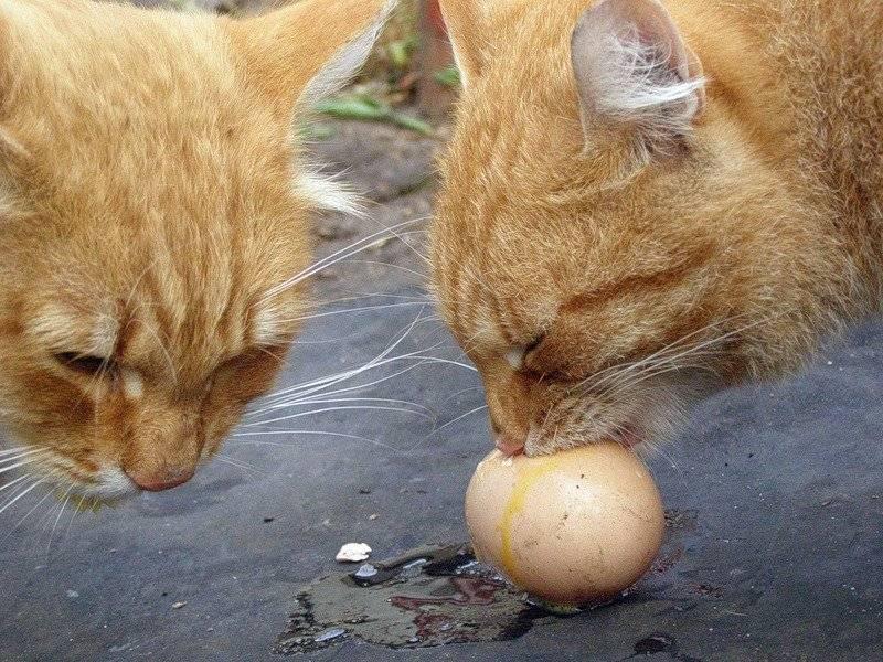 Почему кошка лижет человека: основные причины и что это значит