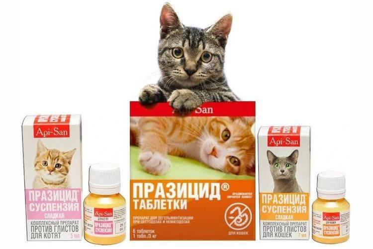 Празицид-суспензия плюс для взрослых кошек и маленьких котят: инструкция