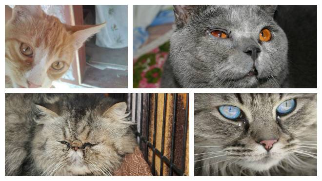 У котёнка слезятся глаза — причины и что делать