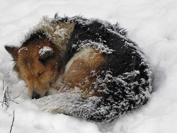 Холод для кошек: какую температуру выдерживают, переохлаждение