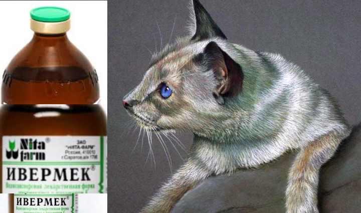Ивермек для кошек: инструкция по применению, дозировки, препарат в виде геля и спрея, куда колоть уколы и что делать в случае передозировки - отзывы