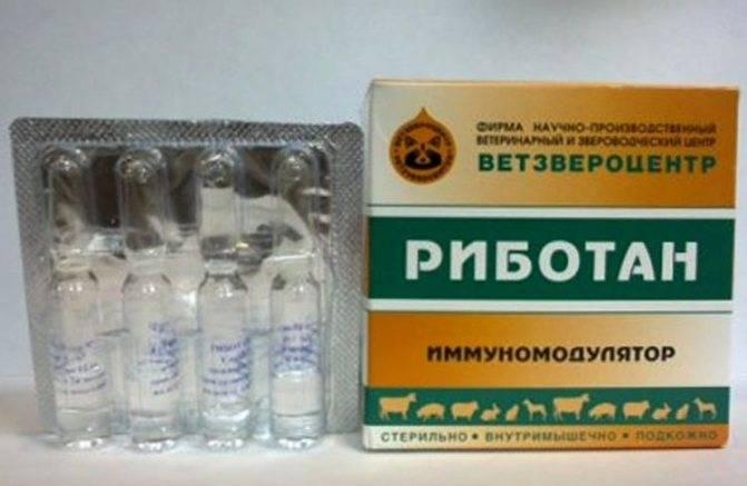 Риботан: когда и как использовать иммуномодулятор для кошек. риботан: инструкция по применению риботан для кошек — отзывы