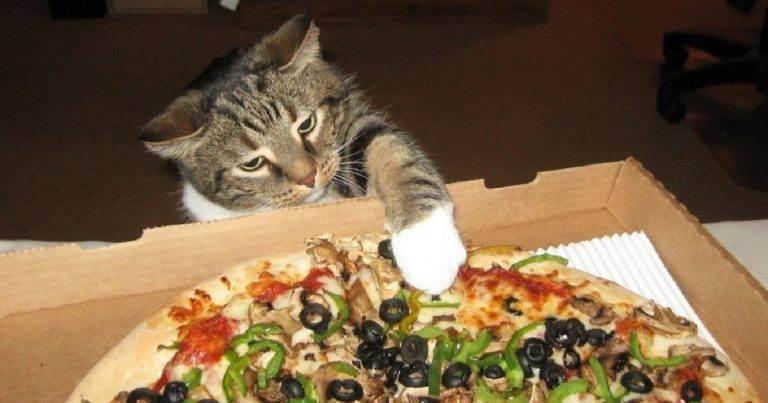 Почему увеличение аппетита у кошки должно насторожить хозяина?