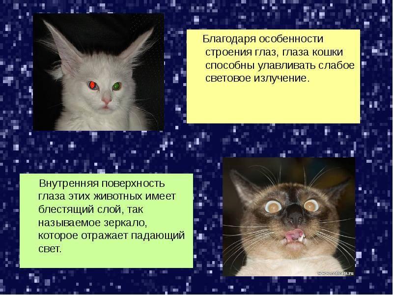 20 любопытных фактов о кошках :: инфониак