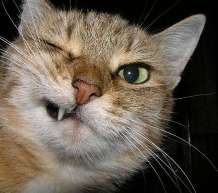 Кошка щурит глаз