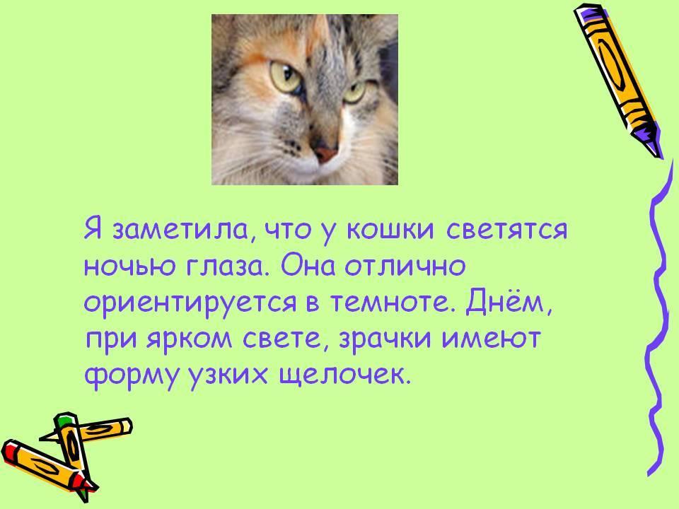 Почему у кошек светятся глаза в темноте | кот и кошка