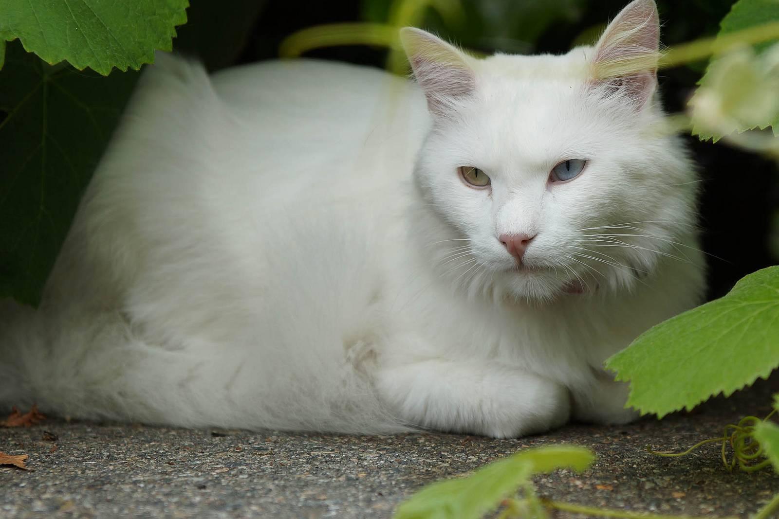 Черно-белый кот (42 фото): названия пород пушистых черно-белых кошек, котенок черного окраса с белыми пятнами на грудке