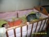 Чего опасаться от кота и новорожденного ребенка?