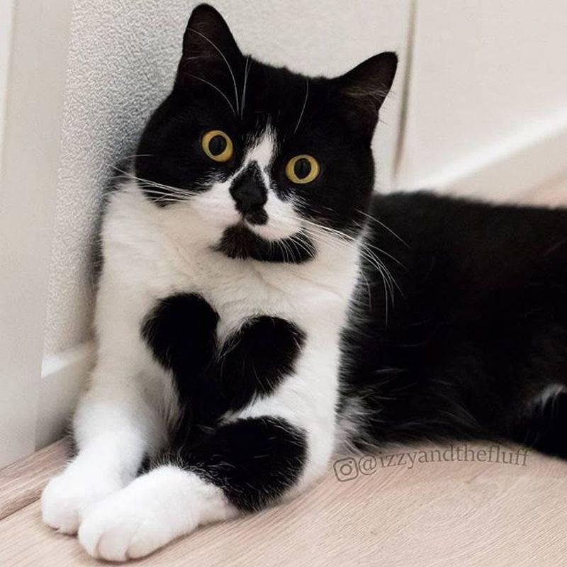 Породы кошек с окрасом «мраморный табби»: фото и описание экстерьера необычных котов