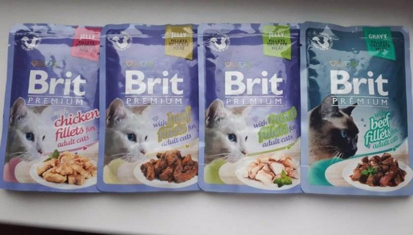Корм брит (brit care) для кошек — состав, плюсы и минусы | животный мир
