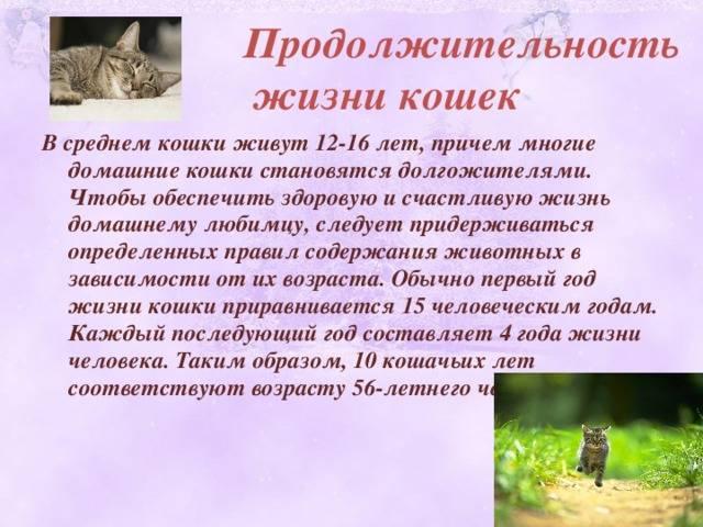 Сколько живут кошки. продолжительность жизни кошек