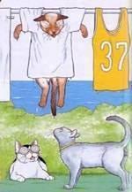 Как согреть котенка после купания. можно ли сушить кошку феном? можно ли сушить кошку феном после купания