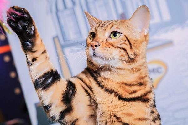 Есть ли у кошек память и какая она