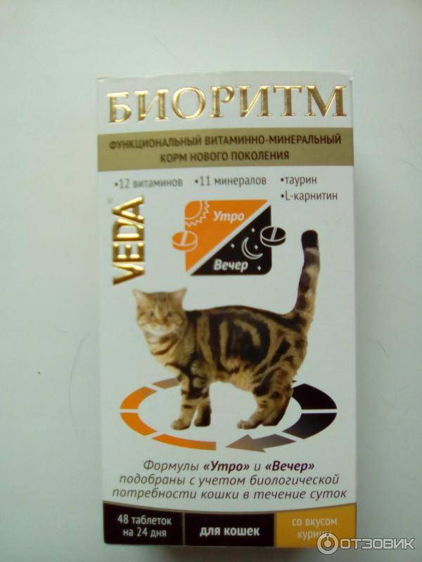 Для чего нужен таурин для кошек? вред и польза таурина для кошек | маленькая сызрань