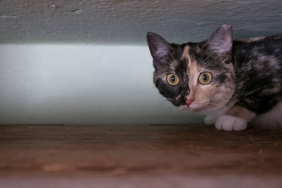Что делать если котенок тебя боится, как правильно его успокоить