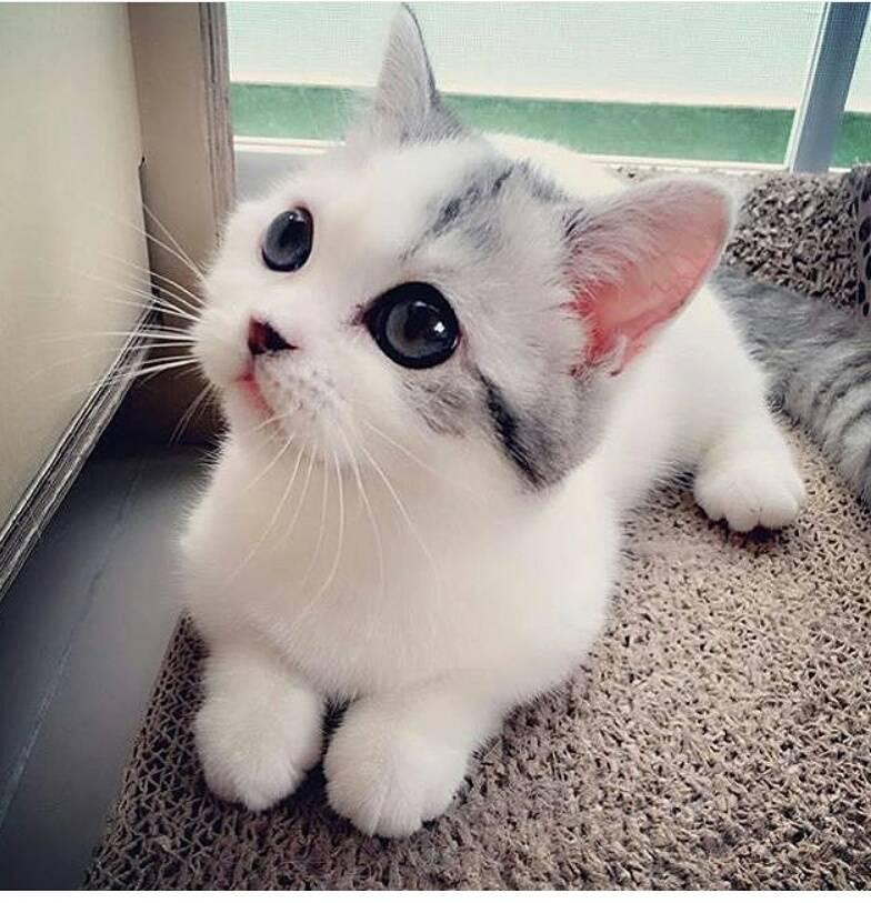 Самые красивые породы кошек — список, характеристика и фото