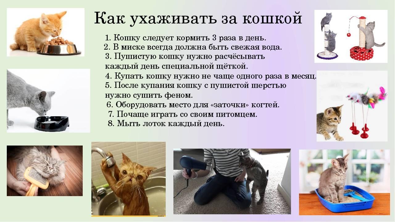 Как ухаживать за кошкой или котом в домашних условиях в квартире или частном доме?