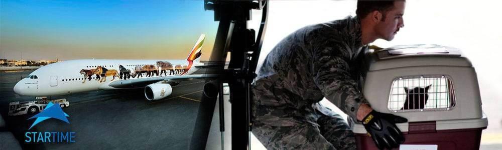 Перевозка животных на воздушном транспорте / национальный туризм