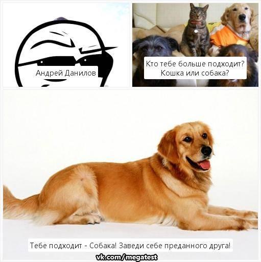 Светлана лукьянова / сравниваем кошачий и собачий интеллект: кто умнее.