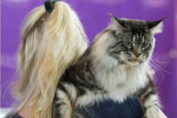 На что у кошек аллергия | мои домашние питомцы