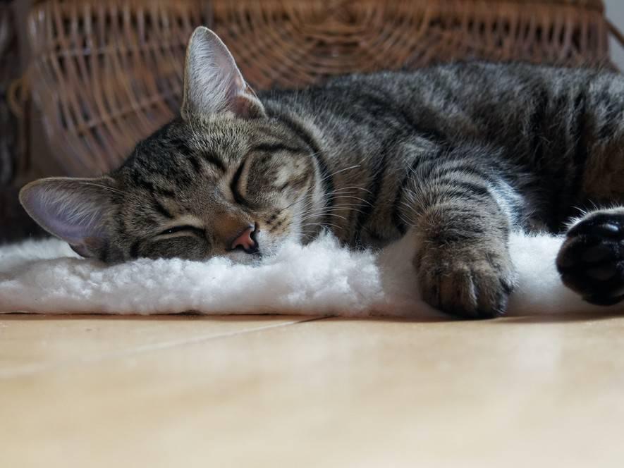 Сонник собственный кот. к чему снится собственный кот видеть во сне - сонник дома солнца