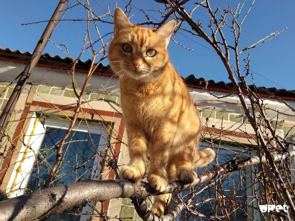 Можно ли давать кошкам лук и чеснок?