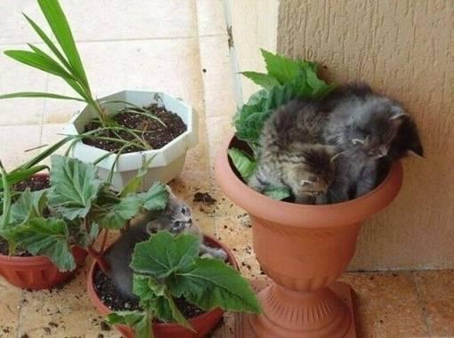 Как защитить комнатные растения от домашних животных: народные средства