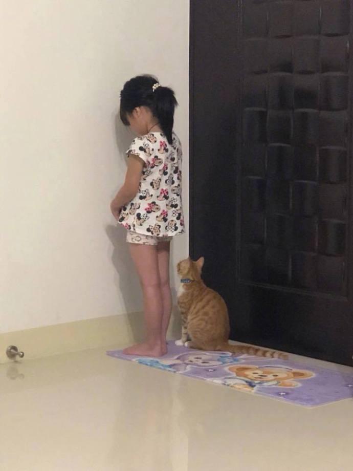 Как наказать за плохое поведение котенка или взрослого кота, чтобы он понял, можно ли кошку бить в целях воспитания?