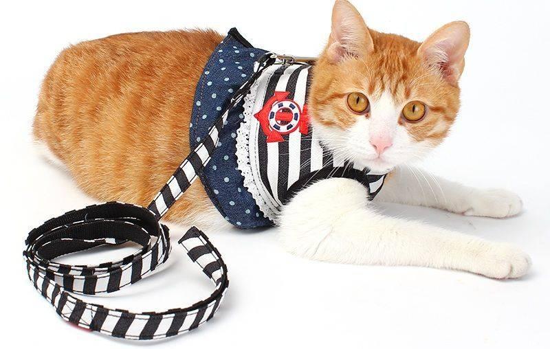 Шлейка, ошейник и поводок для кошки или кота: как сделать своими руками, особенности изготовления для котят и взрослых животных
