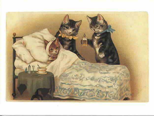 Признаки болезни у котов
