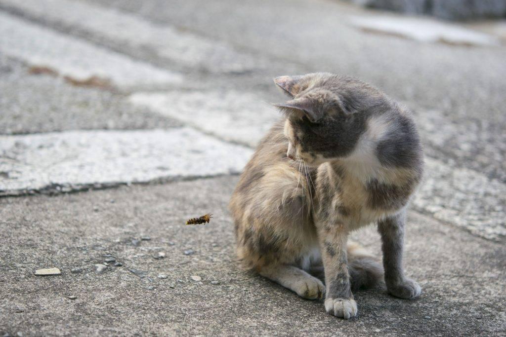 Кота укусила оса - насколько это опасно и что делать.