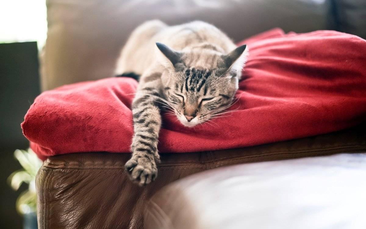 К чему снится кот?