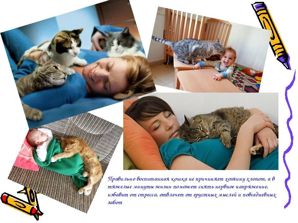 Как воспитывать котенка: правила, сложности, чему учить