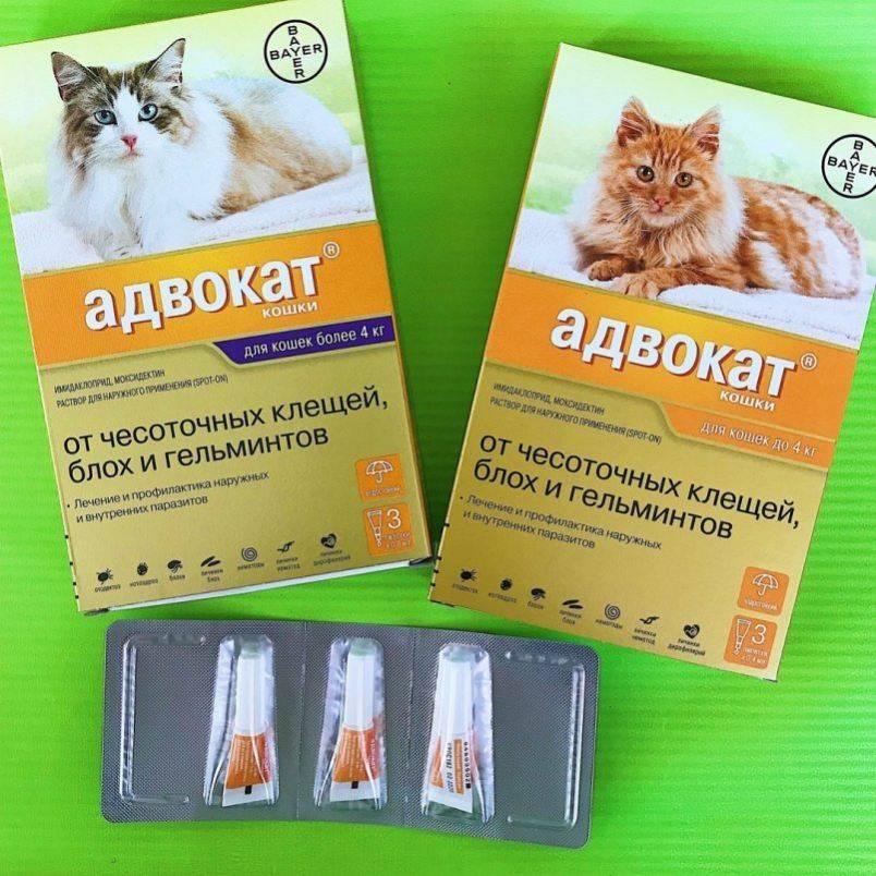 Сколько стоят капли Адвокат для кошек?