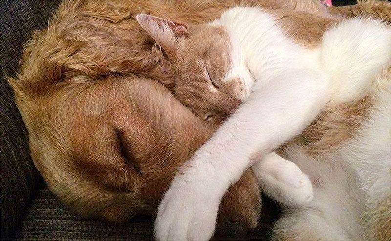Кто лучше кошки или собаки – что учитывать при выборе домашнего питомца?