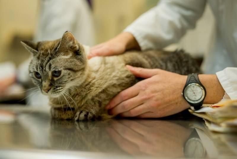 Стресс у кошки: симптомы и лечение. как снять стресс у кошки