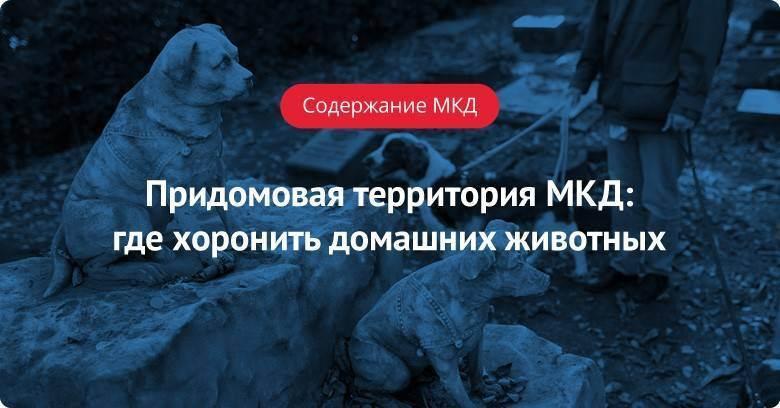 Можно ли хоронить животных, как и где хоронят собак и котов