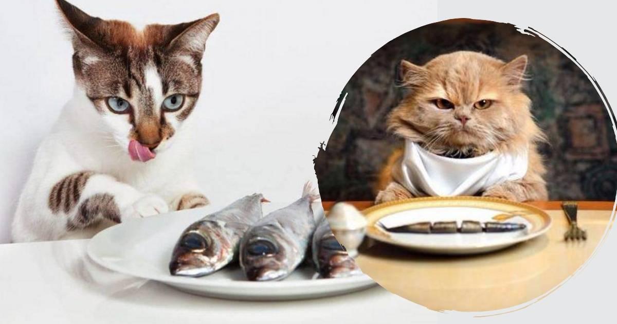 Можно ли кошкам рыбу с костями: острые и опасные.