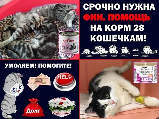 Место для кошки — советы по выбору, правильное размещение и подготовка квартиры к приходу питомца (130 фото + видео)