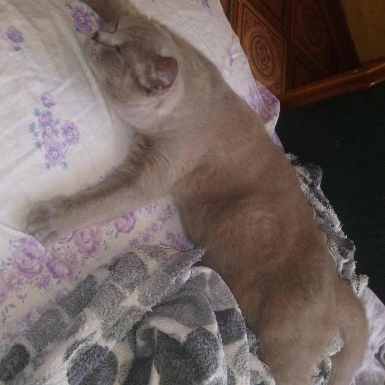 На какой неделе начинаются шевеления котят у кошки