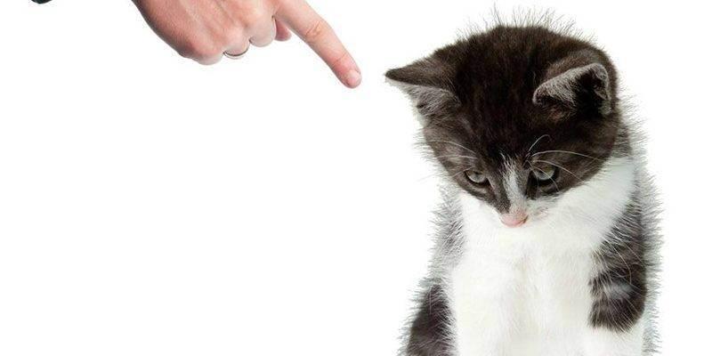 Как отучить кошку метить свою территорию в квартире
